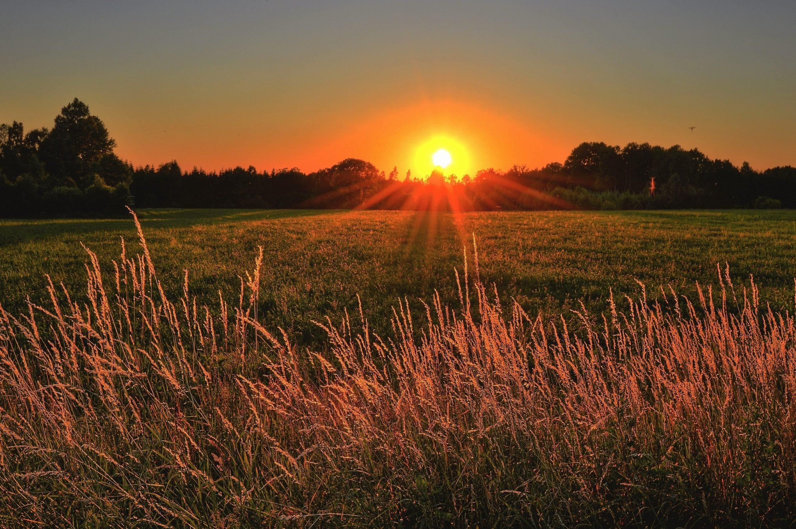 Trees Field Sunrise
