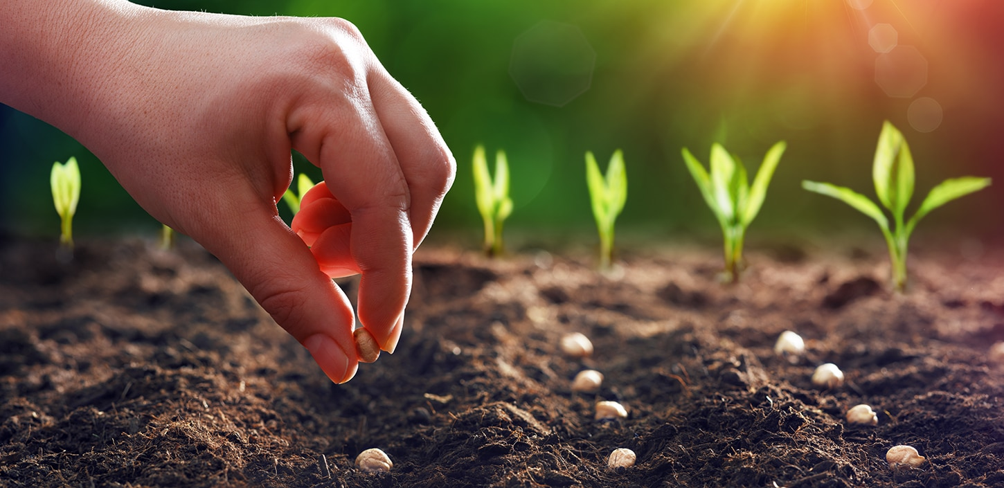Planting Seeds What If You Don't See Results
